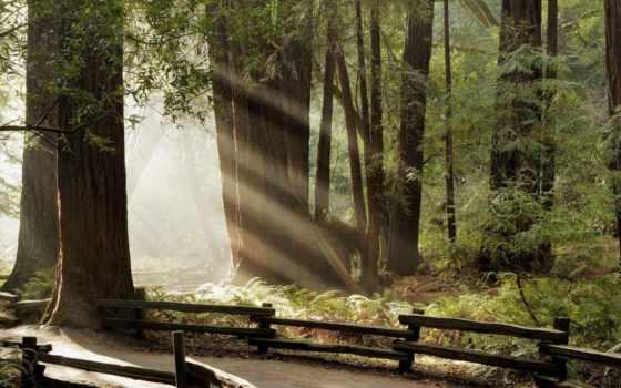 дорога, лесу, лес