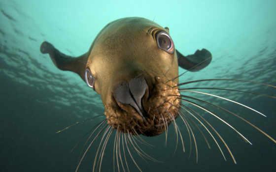 море, тюлень, марина