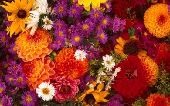 цветы, осенние, garden