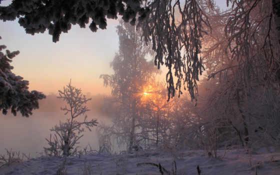 winter, sun, природа, сибири, снег, года, rays, trees, зимы, лес,