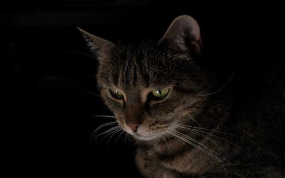 cats, black, кот