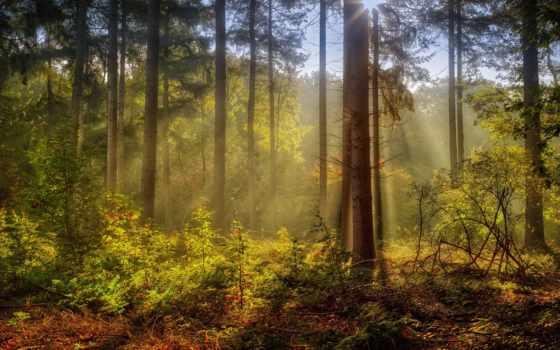 fore, дерево, sunlight, trees, лес, фото, природа, landscape, солнечный, свет