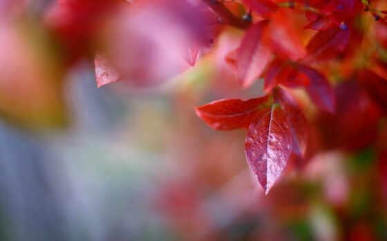 макро, листья Фон № 24033 разрешение 1680x1050