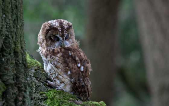 instagram, owls, tree, photos, bird, desktop, pictures, owl,