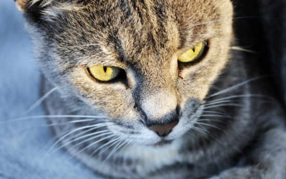 gato, тварини, подборка, красивые, красивых, девушек, графика, mili, компьютер, новости, ojos, шпалери, gris,