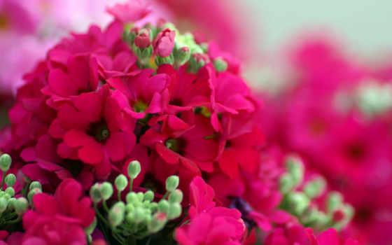 весна, цветы, весенние Фон № 103260 разрешение 1920x1200