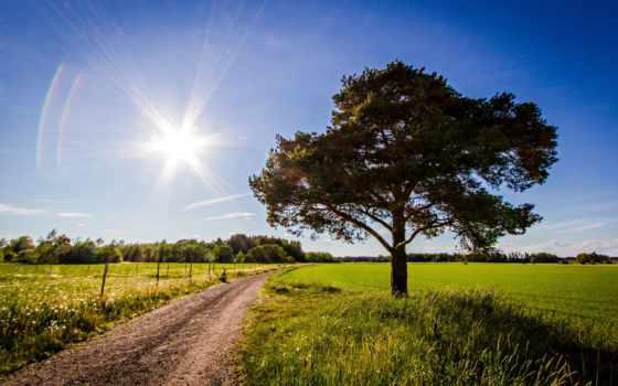 качественные, full, природа, фото, sun, небо, landscape, представлены, поле, дерево,