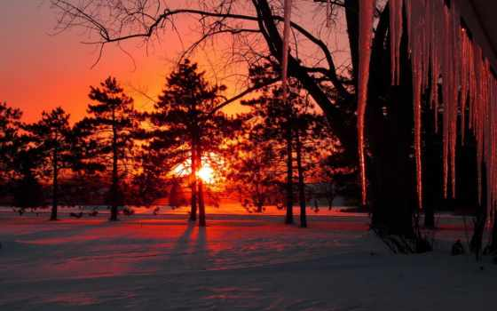 sun, закат, winter, снег, trees, сосульки, лес, вечер,