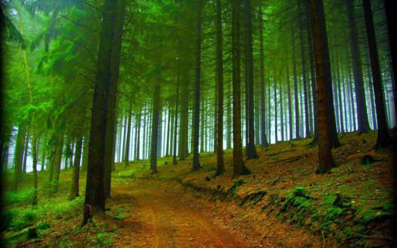 пицунда, абхазия, картинка, абхазии, природа, осень, desktop, free, следы, лес,