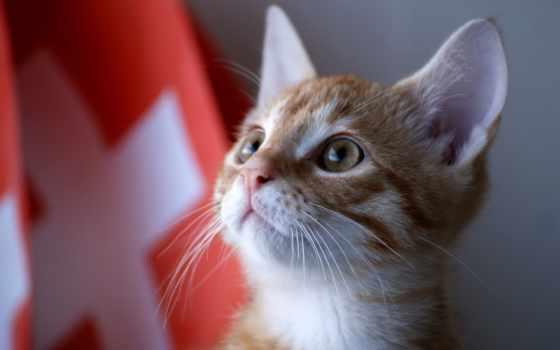 swiss, армия, кот, cats, zhivotnye, нояб, eating, свет,