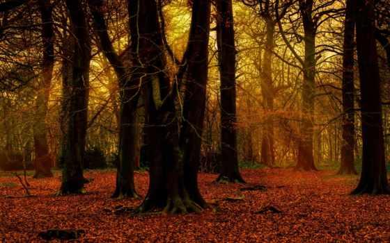 park, лес, trees, imgator, природа,