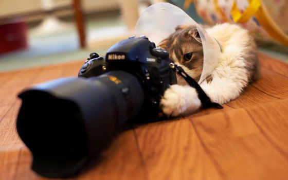 кот, фотоаппаратом, играет, фотоаппарат, смотрит,