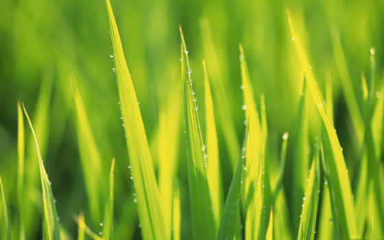 фотообои, зелёный, flora, страница, сочная, зелёная, листва, главная, yellow, ukraine,