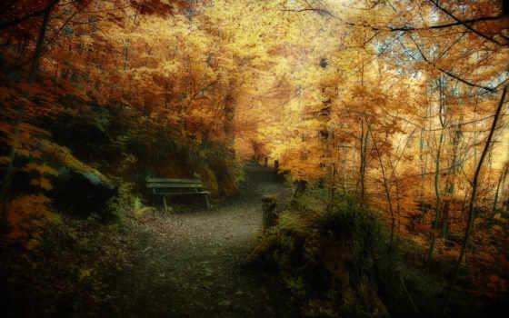 parede, natureza, outono, papéis, god, htc, imagens, wildfire, оформление, papel,