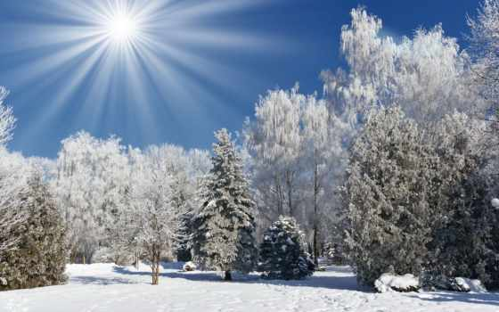 winter, sun, снег, лес, trees, rays, иней, природа,
