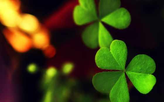хороший, лист, макро, зелёный, трава, листва, clover, luck, удачи,