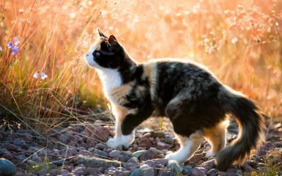 кот, stand, камень, see