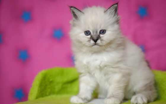 котенок, kitty, white, кот, розовый, лоли, moderation, cute, baby, морда