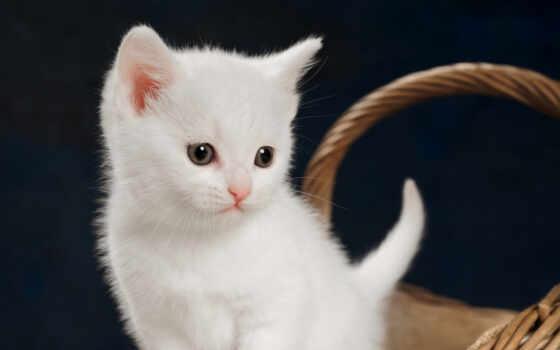 кот, baby, cute, котенок, animal, тест, trikk, устройство, drawing