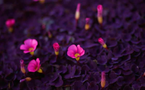 цветы, яркие