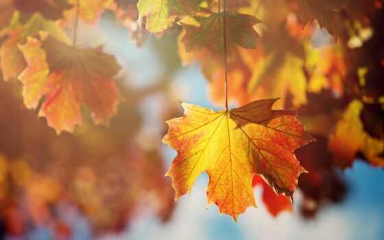 оранжевые, листья