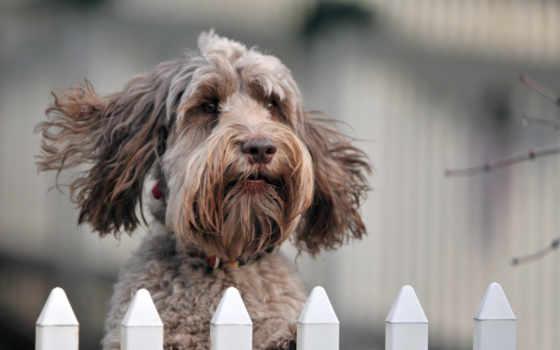 забор, собака, взгляд