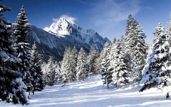 winter, снег, макро, природа, blizzard, снегопад, eli,