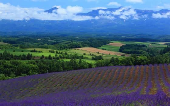 природа, ди, lavender, поле, high, free, landscape, definition,