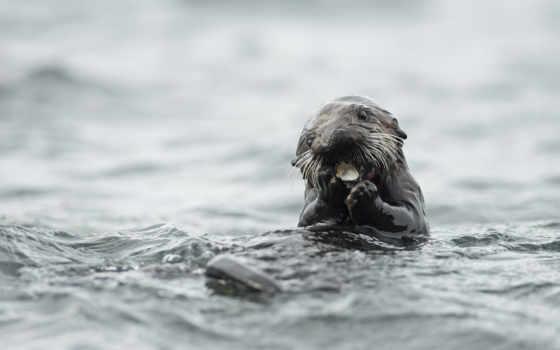 otter, animal