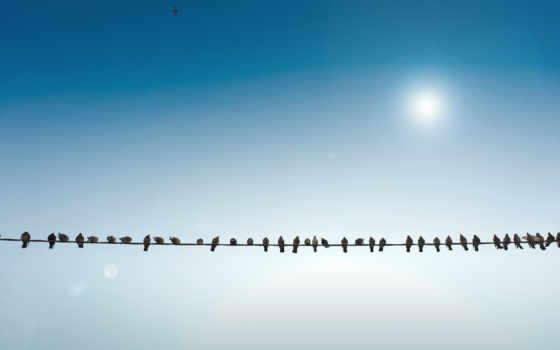 птицы, провод