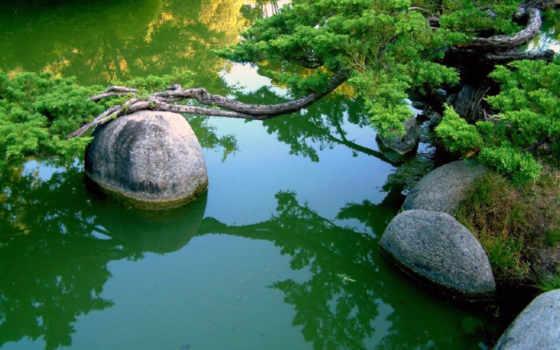ветки, пруд, вода, камни, дерево