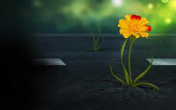сквозь, цветы, асфальт