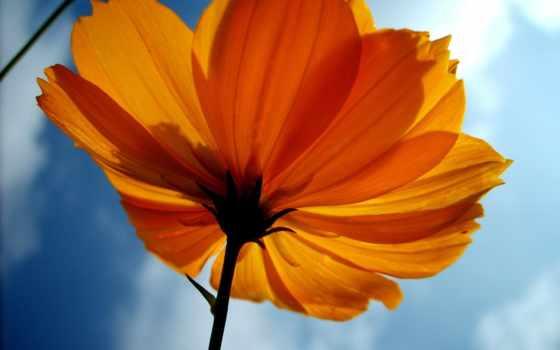 ubuntu, цветы, everything
