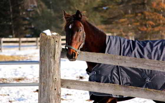 лошадь, снег, winter