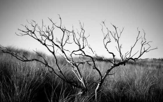 дерево, чёрно, trees, сухое, oblaka, небо, дерева, белое, боле, засохшего, природа,