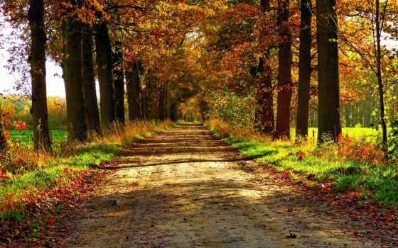 природа, осень, free, лес, только, дорога, desktop, пасть,