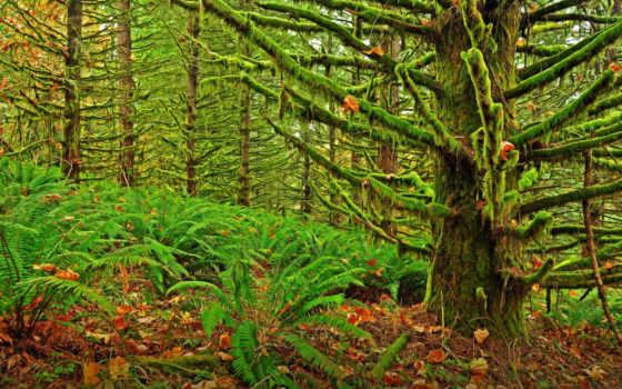 евгения, oregon, moshisty, landscape, лес, por,