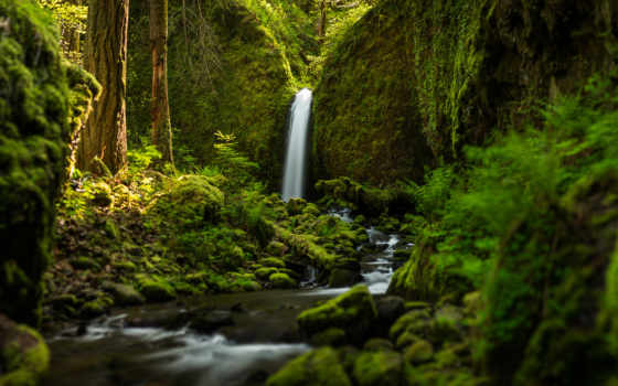 красивые, водопад, лес, самые, природа, страница, широкоформатные, зелёный, живые,