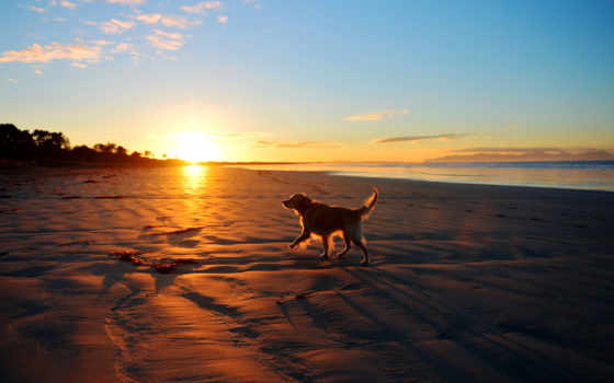 море, собака, собаки, друг, закат, моря, породы, лучшая, коллекция, landscape,