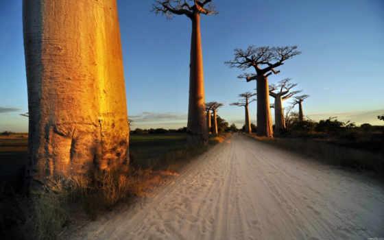 baobab, дерево, тренировочный, дома, life,