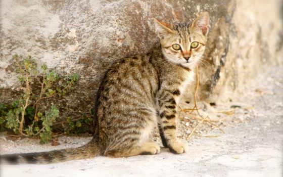 striped, кот, animals