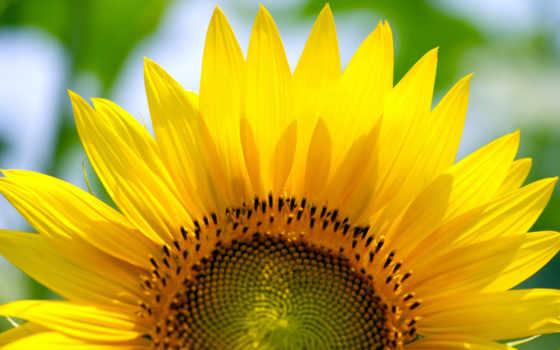 flower, изображение