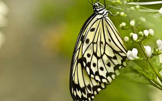 бабочка, цветок Фон № 23931 разрешение 1920x1200