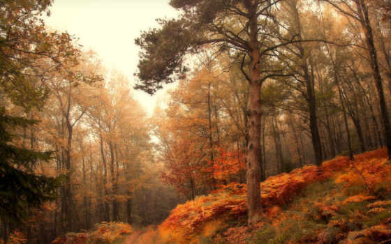 лес, осень, природа Фон № 57020 разрешение 1920x1080