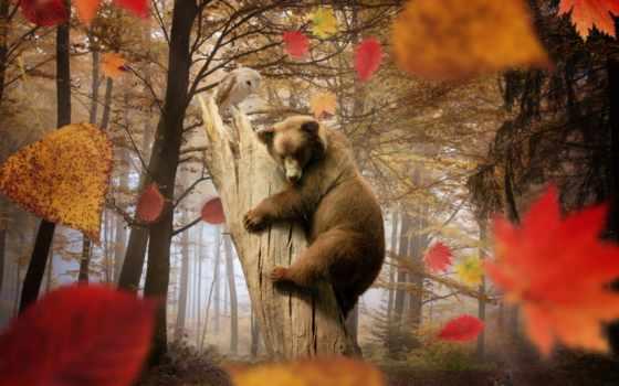 осень, листва, zhivotnye, сова, медведь, лес, листопад, грибы, trees,