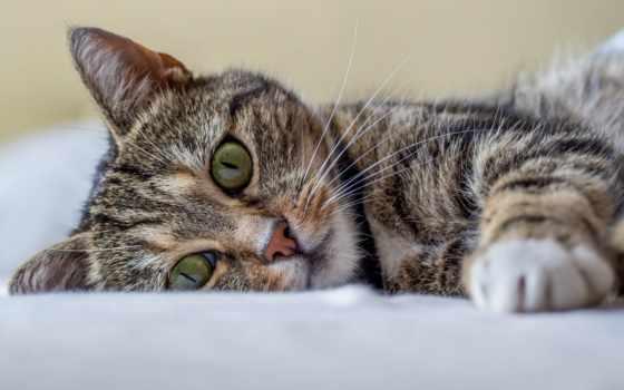 animal, любимое, mine, кошек, может, композиция, мар, будет,