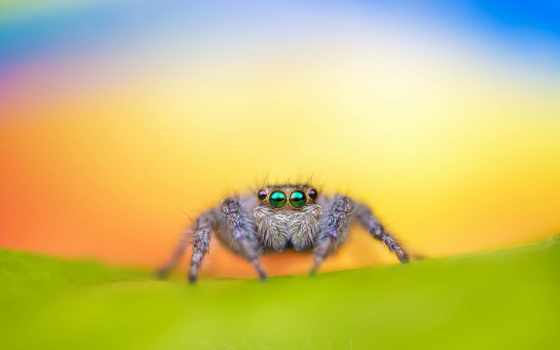 photos, desktop, паук, canon, jumping, pictures, free, flickr, spiders,
