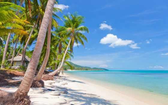 море, пальмы, скинали