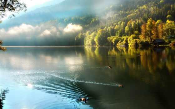 утро, озеро, туман, лес, горы, утки, природа,