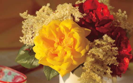 цветы, flower